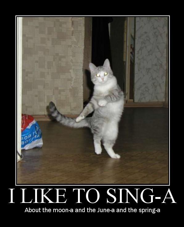 Broadway Cat