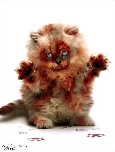 Zombie Kitteh